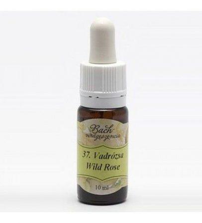 Bach Virágeszencia Vadrózsa 10 ml - Alternatív gyógymód, Bach virágterápia